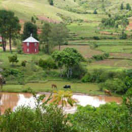 Landschaft im Hochland mit grasenden Zebus