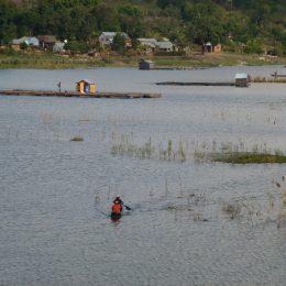 Hochwasser im Reisfeld